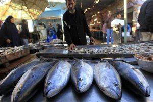 أسعار الأسماك بسوق العبور اليوم الأحد