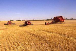 التموين تعلن عن التفاصيل كاملة لـ موسم توريد القمح المحلي
