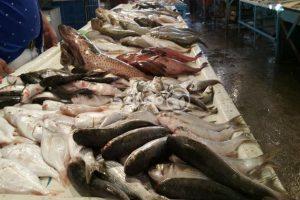 ارتفاع الكابوريا والجمبري وتراجع أسعار البلطي.. إليكم أسعار الأسماك بسوق العبور اليوم