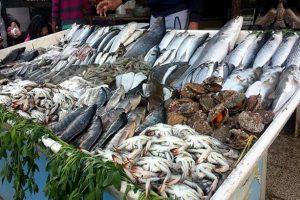 أسعار الأسماك بسوق العبور اليوم الخميس 1 أغسطس