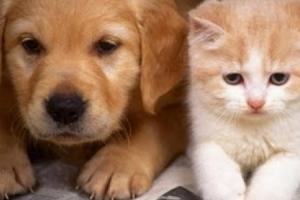 تعرف على.. التعديل التشريعى لتربية الكلاب والحيوانات بالمنازل وعقوبات مضاعفة لإيذاء الآخرين