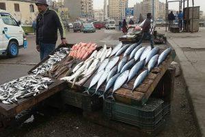 النوة تخفض سعر السمك الدنيس وتنعش أسواق الإسكندرية التجارية