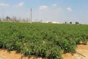 إعفاء المخصص لهم الأراضٍ الزراعية في المدن الجديدة من غرامات التأخير