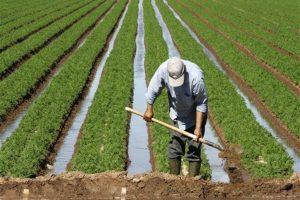 أهم 10 معلومات عن قانون الزراعة العضوية