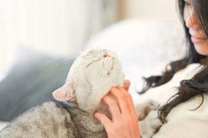 احذر من القطط والكلاب.. قد تسبب انتقال فيروس كورونا